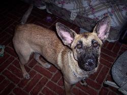 dog - my puppy