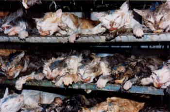 The Fate Of Cats After Testing - images of cats used for animal testing