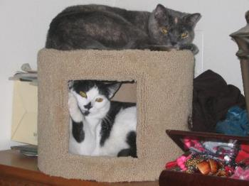 Carlye and Ashley in their Condo - My Beautiful Kitties in their condo together. They almost never co-exist in the same space. This is a rare picture.