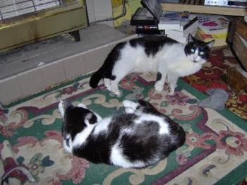 Felix and Poppy - This is Felix (at the back) and Poppy chilling out as cats do.