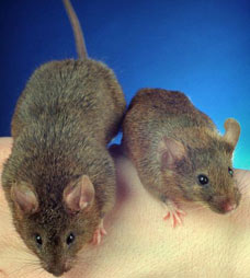 mice and cheese - According to Dr David Holmes mice don't like cheese