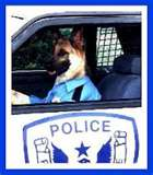 cop dog - Laughing while driving! lol
