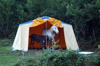 camping - camping with donkey