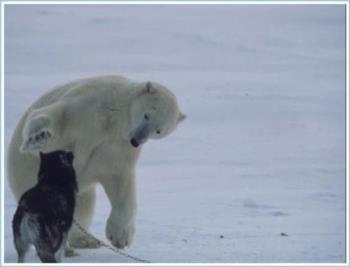polar bear - Polar bear patting dog on the head.