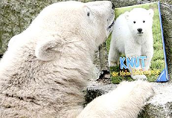 Knut The Polar Bear - Has my support, the poor little guy doesn't understand.
