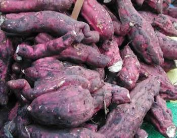 Camote - here's a photo of the camote, root crop.
