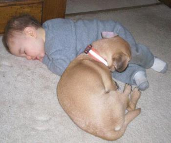 Hemi the Protector - This is our Puggle Hemi sleeping with a boy I babysit for. Arnt they cute?!