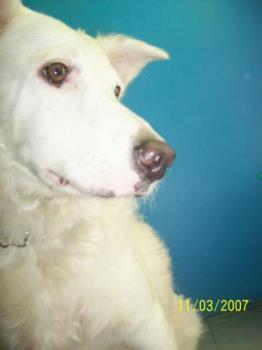 Casper - That's our Casper, the friendly dog!