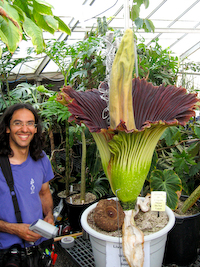 Corpse Flower - A strangely beautiful (but stinky) flower.