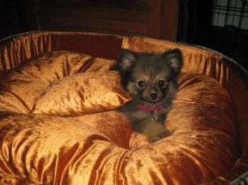 ulay - her name is lyka.
