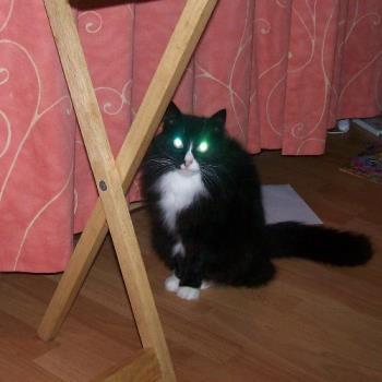 Tia Maria - My cat Tia