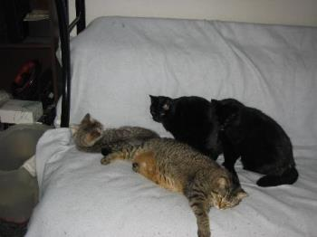 my four cats - I love my cats they are my kids