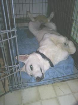 Zoe  - Here is my dog, not worn out, but sleeping weird..lol