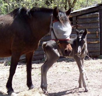 day one - day old foal