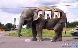 Funny - school bus