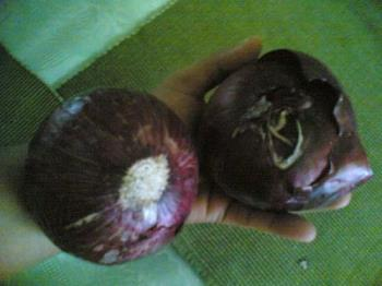 onions - onions..two red onions.