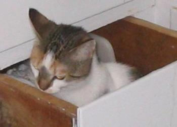 Kitty in a Drawer - 