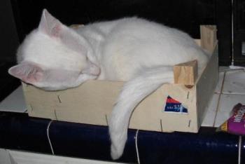 Timus - in a box