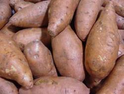 sweet potato - sweet potato