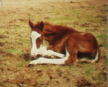This is Heather - The baby horse that I used to have many years ago.