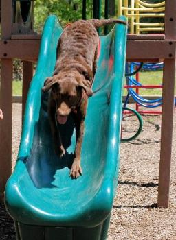 tinker on the slide - she loves going down the slide at the campgrounds and at the park