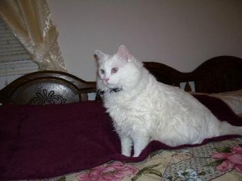 Buffy - My 23 pound scaredy cat.