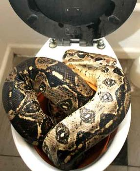 What S The Weirdest Thing You Ve Dropped In The Toilet