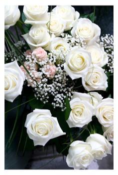 White Rose - White Roses