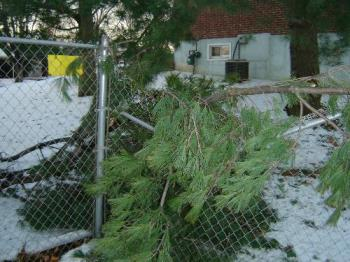 Fence Damage - Photo of our fence which was damaged by our neighbor's tree.