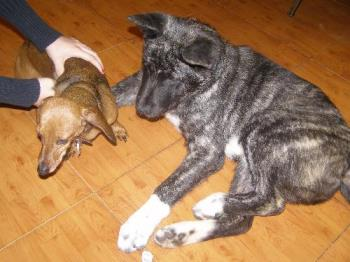 Shilo and corkie - these are my two furry babies.