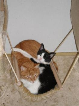 Beertje en Poekie - A cute pic of my moms red cat and my boyfriends spotted cat sleeping together, having a good time :)