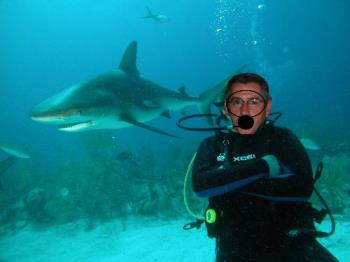 which is the shark? - iy i u iuy it uysti