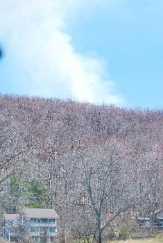 fire on the mountain - wildland fire