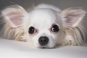 white dog - photo of cute white dog