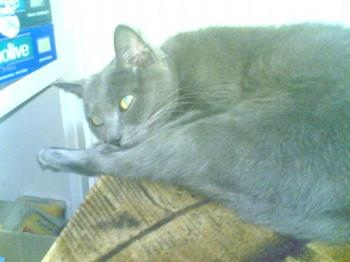 Caty - Caty,my cat