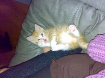 bisse - my cat bisse when he was still two months old.