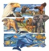 Zoo - illustration of animal collage
