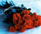 Roses for your anniversary - These roses are for you and your husband for your anniversary. Red simplizes the deep feelings of love one has for the other. Celebrate your anniversary and renew your love for each other.