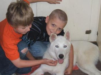 my two boys with the family pup - Frost at 7 month with my boys. Frost is an AKC Siberian Husky.