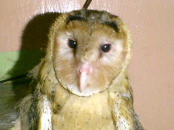 my big bird... Bardy - he was so cute...