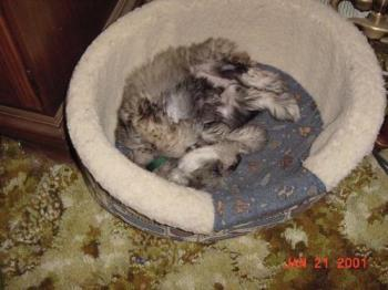 my dog Rocky asleep in his bed upside down - photo of my dog Rocky sleeping