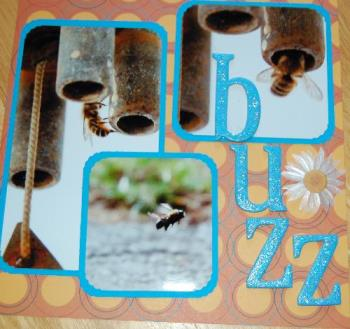 buzz - one of the summer layouts I did for scrapbooking