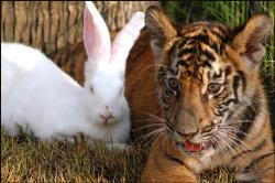 Best Friends - Tiger and bunny