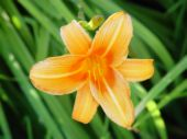 A flower -  This is a picture of a flower.