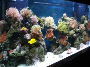 AquaWorld - Sea Creatures