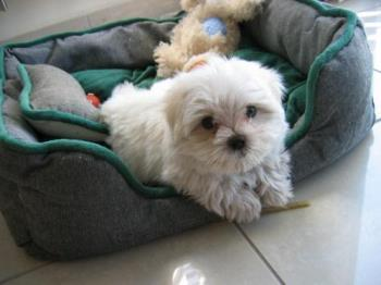 Cosmo ... - A little cutie.