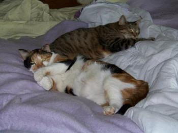 Abagail and Sammy on the bed - Abagail and Sammy on our bed,