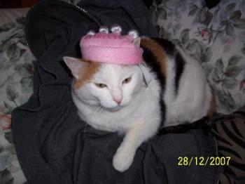 cat costume - my cat Angel dressed up for Halloween ;)