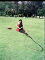 World's Longest Hair - This picture if of Xie Qiuping of China. The woman with the world's longest hair according to the Guinness Book of World Records. It measured 18 ft 5 inches in 2004.