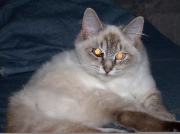Bella the pretty kitty cat..... - Bella the pretty kitty cat........